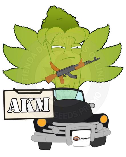 AKM-autofloreciente-pack-1-automatica-seeds.promo-lasemillaautomatica