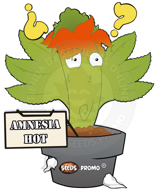 Amnesia Hot-fotodependiente-pack-1-feminizada-seeds.promo-lasemillaautomatica