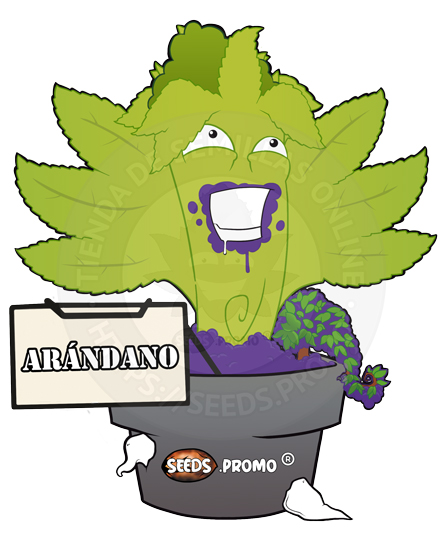 Arandano-autofloreciente-pack-1-automatica-seeds.promo-lasemillaautomatica