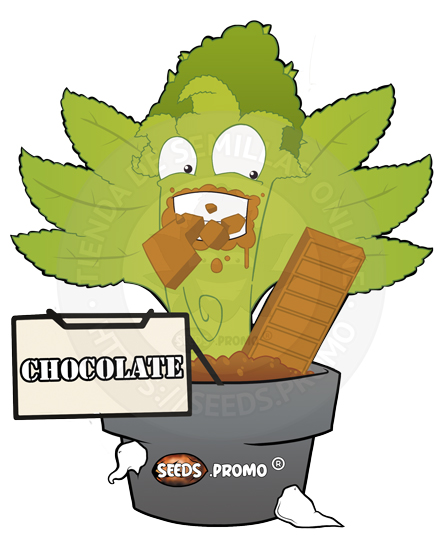 Chocolate-fotodependiente-pack-1-feminizada-seeds.promo-lasemillaautomatica
