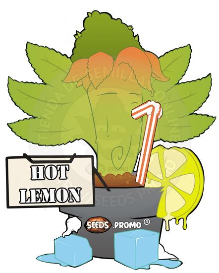 Hot Lemon-feminizada-pack-1-fotodependiente-seeds.promo-lasemillaautomatica