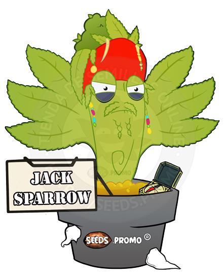 Jack Sparrow-autofloreciente-pack-1-automatica-seeds.promo-lasemillaautomatica