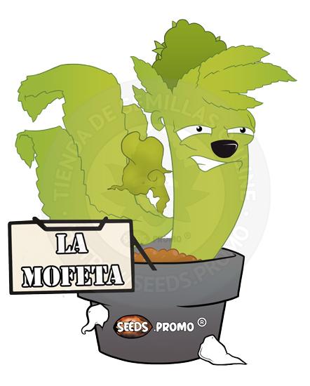 LaMofeta-autofloreciente-pack-1-automatica-seeds.promo-lasemillaautomatica