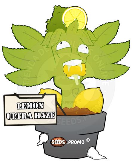 Lemon-Ultra-Haze-autofloreciente-pack-1-automatica-seeds.promo-lasemillaautomatica