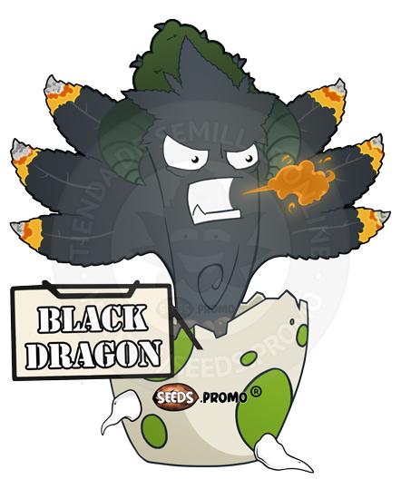 semillas feminizadas black dragon