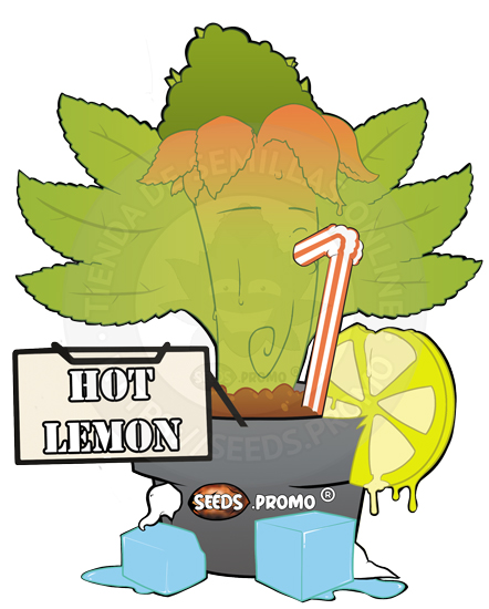 semillas feminizadas para exterior hot lemon
