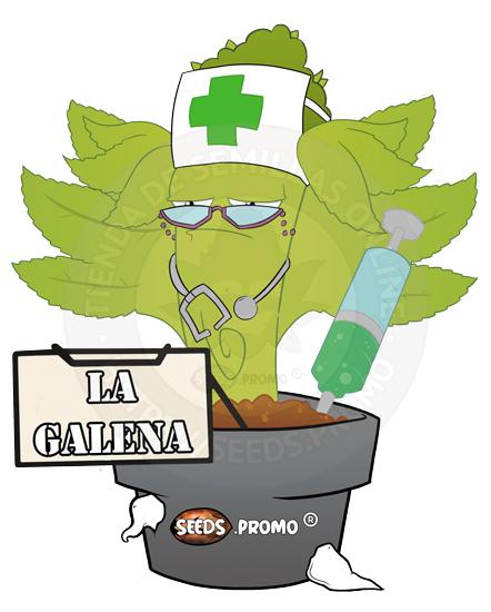 La Galena-CBD autofloreciente-pack-1-automatica-seeds.promo-lasemillaautomatica