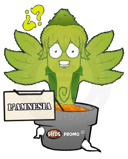 Lamnesia-autofloreciente-pack-1-automatica-seeds.promo-lasemillaautomatica
