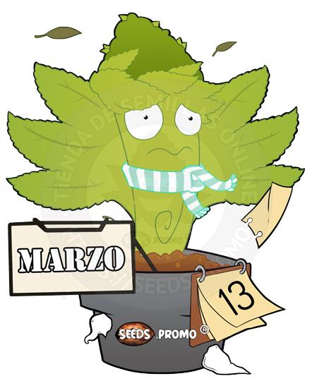 Marzo-autofloreciente-pack-1-automatica-seeds.promo-lasemillaautomatica
