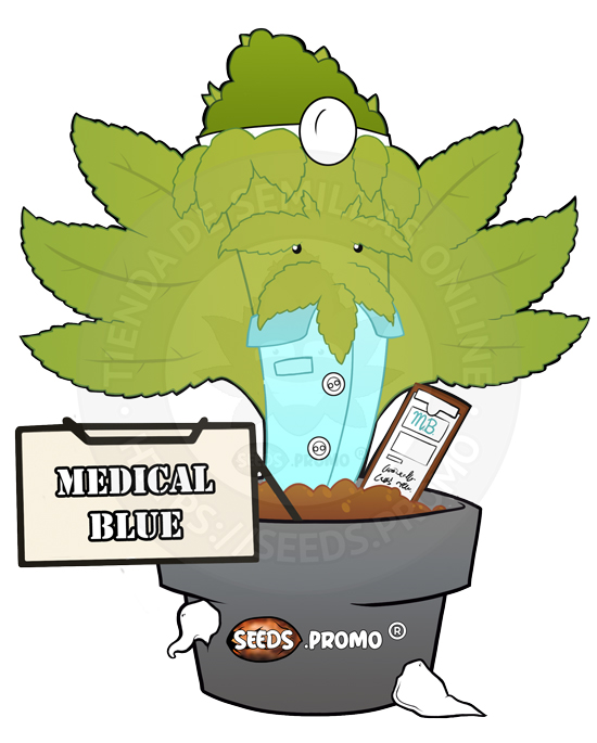 Medical Blue-fotodependiente-pack-1-feminizada-seeds.promo-lasemillaautomatica
